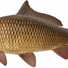 Аксесоари за шаранджийски риболов