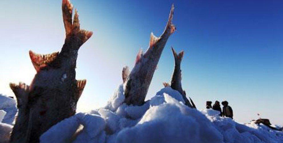 Особености на зимното хранене и поведение на рибите
