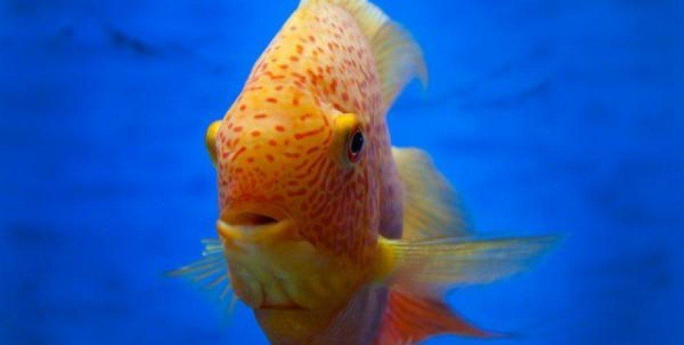 Осезателни органи у рибите