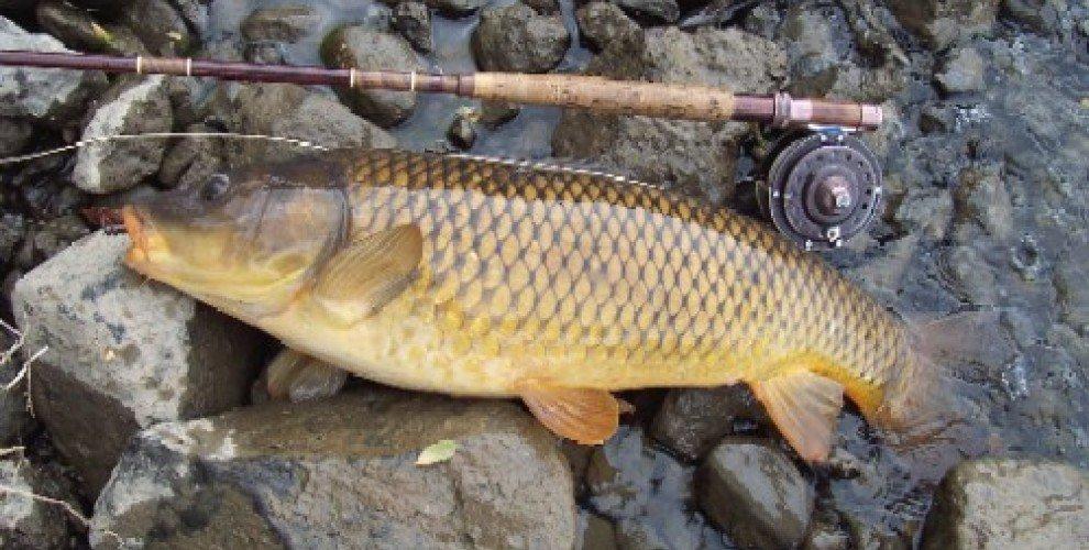 Съвети за риболов на шаран
