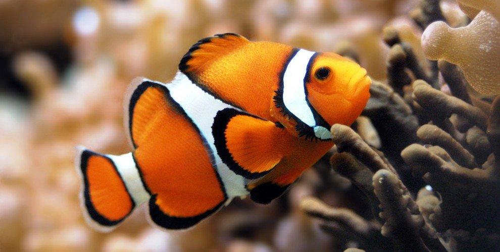 Дънни и пелагични риби у нас