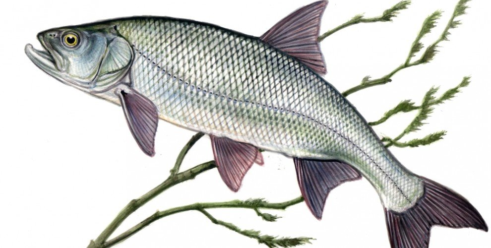 Риболов на РАСПЕР