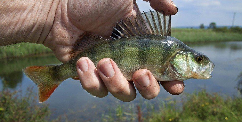 Ароматизиране на мъртви рибки