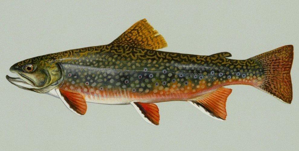 Риболов на пъстърва – видове, характеристики, методи