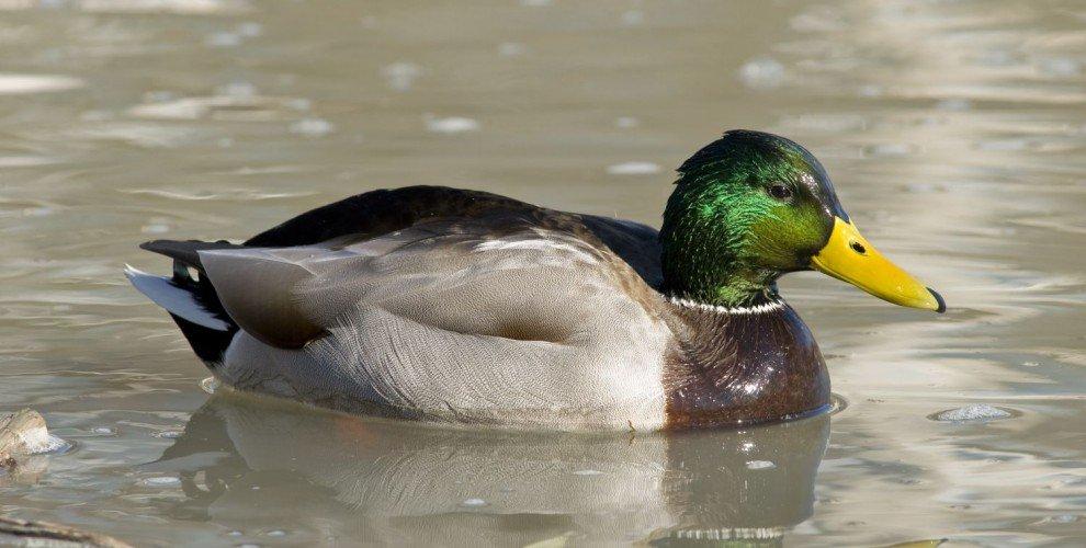 В. Петровски за еднин шаран, патка, хляб и още нещо