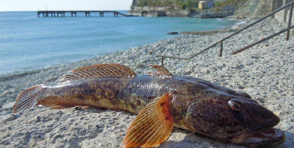 Риболов на попчета през юни