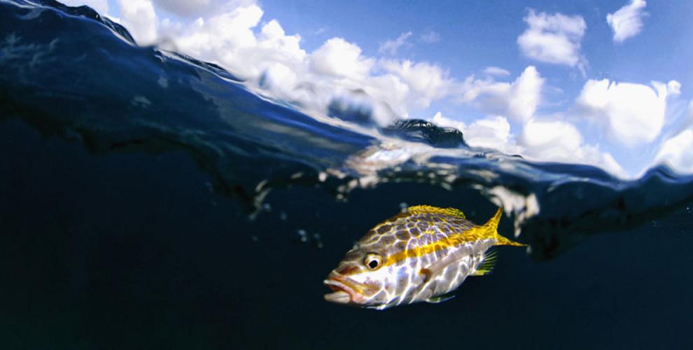Подводен риболов - Морски хищници