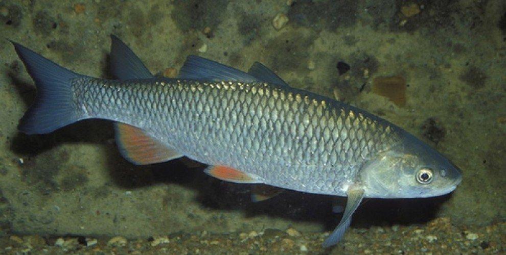 Риболов на едър кефал